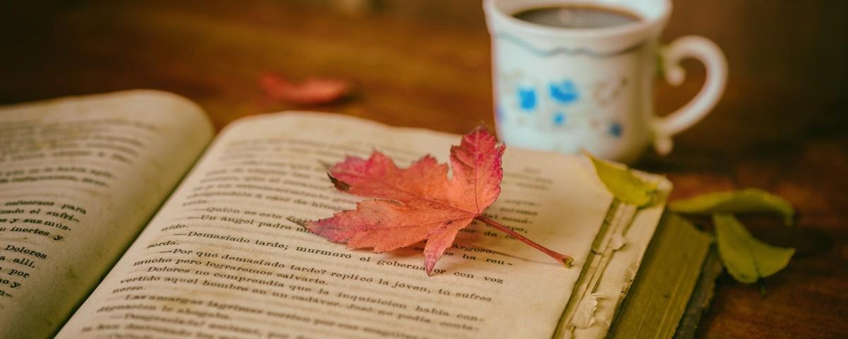 leaves-1076307_1920
